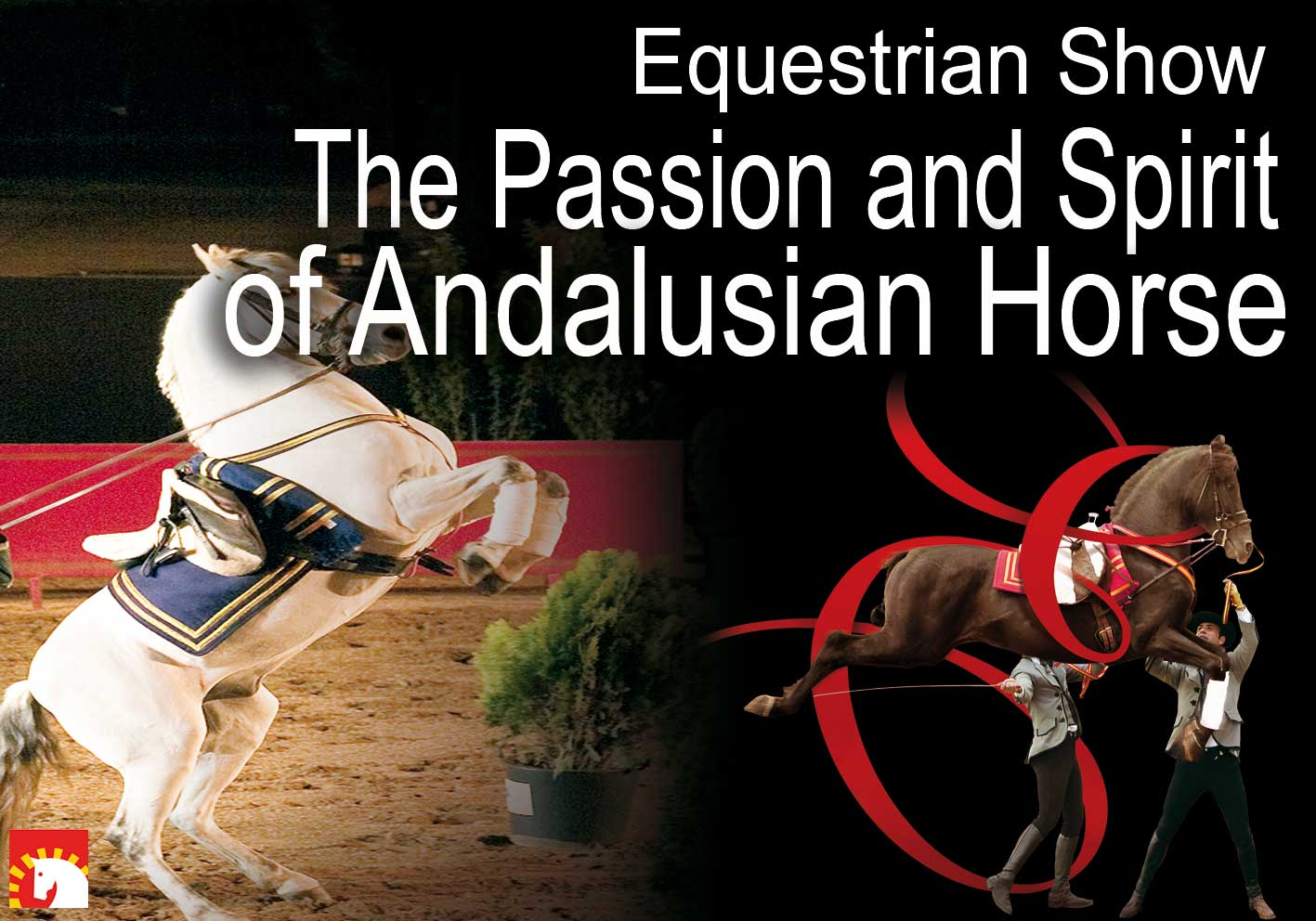 The Passion and Spirit of Andalusian Horse