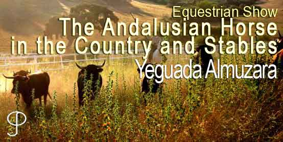 The Andalusian horse in the country and dressage